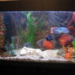 кварцевый песок для обустройства аквариума