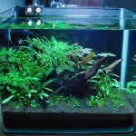 как выглядит природный гравий в аквариуме 2