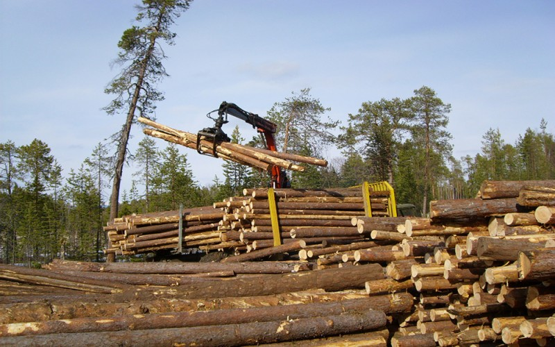 как осуществляется заготовка древесины