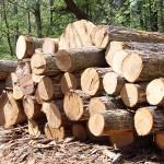 Понятие и описание древесины как строительного материала