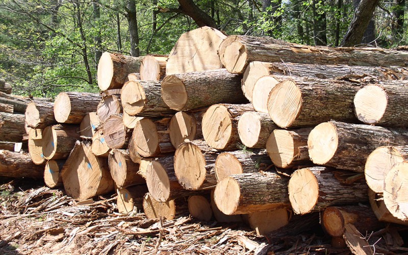 как выглядит древесина