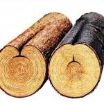 как выглядит прорость древесины