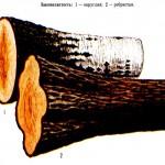 как выглядит закомелистость древесины