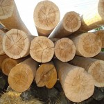 как выглядят трещины древесины