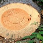 Виды пороков древесины и их влияние на качество пиломатериалов
