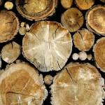 Технологические, физические и механические свойства древесины
