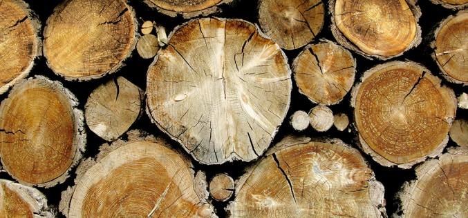 какими свойствами обладает древесина