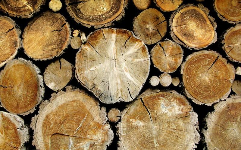 Какими свойствами обладает древесина?