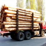 транспортировка древесины автомобилем