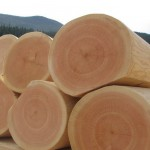Древесина кедра, ее свойства и разновидности