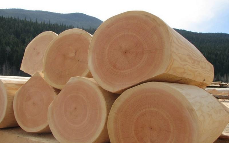 Как выглядит древесина кедра