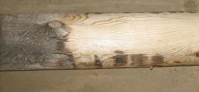 что представляет собой процесс отбеливания древесины