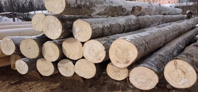 как выглядит древесина осины