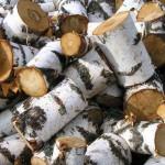 Особенности и свойства древесины березы