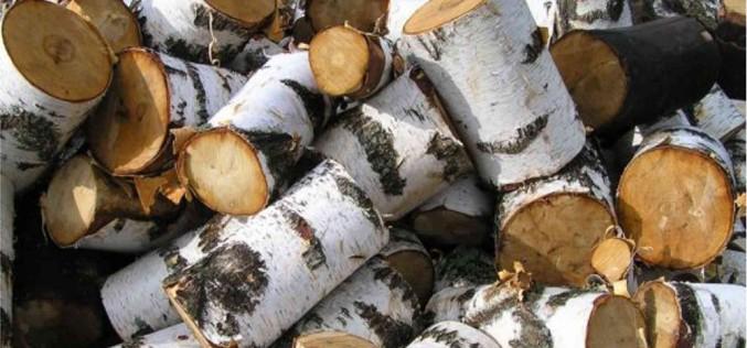 как выглядит древесина березы