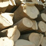 Виды липы, ее древесина и свойства