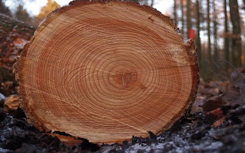 как выглядит древесина лиственницы