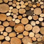 Какие бывают породы древесины и их особенности