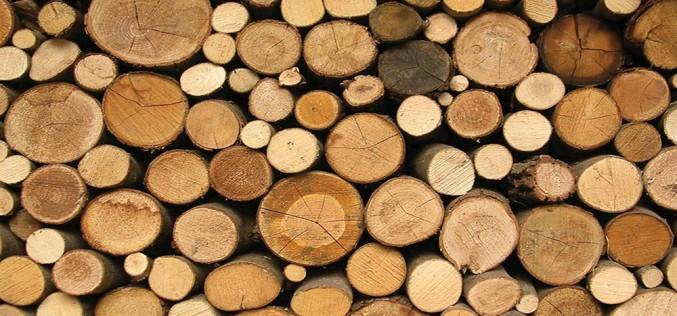какие бывают породы древесины