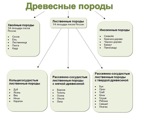 таблица с указанием основных пород древесины